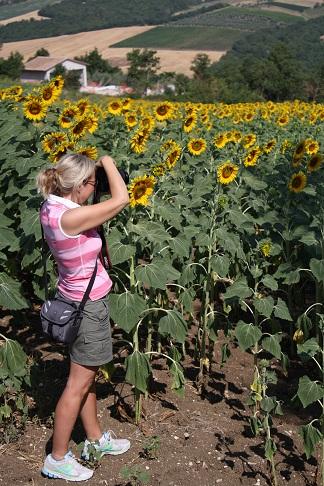 Monte Castello di Vibio, jag och solrosorna.